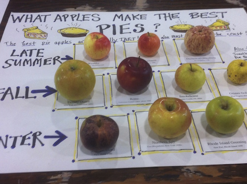MEHO Film Apples Display